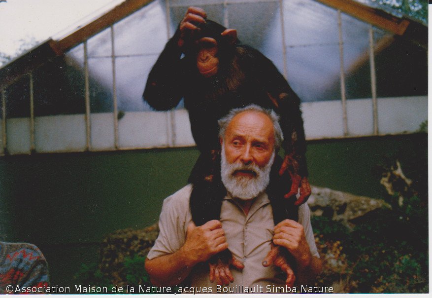 images/stories/Simba et Chimpanse.jpg