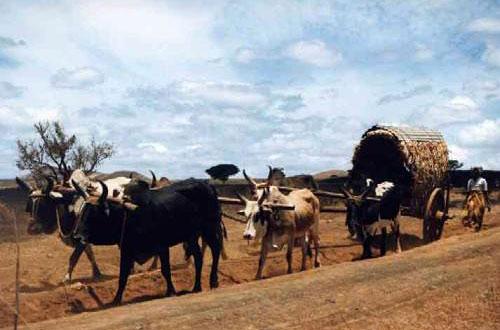Afrique017